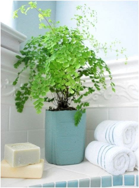 Plants In Bathroom by Plants In The Bathroom Home