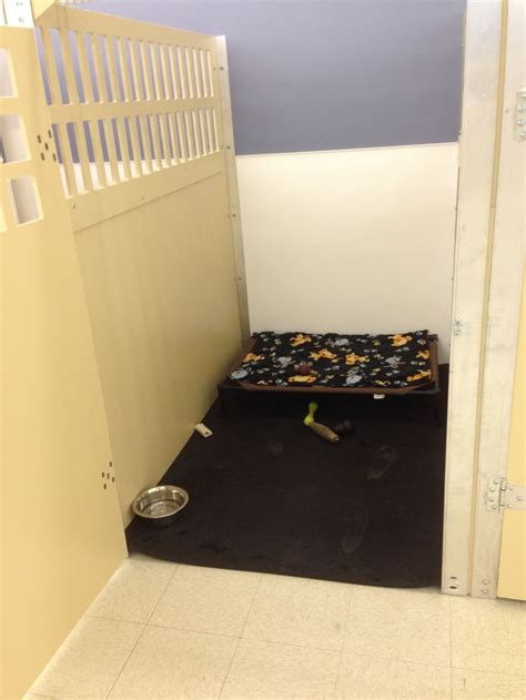 boarding jacksonville fl 67 best daycare images on homes accessories and stuff