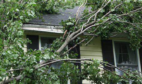 home insurance trees close to house homeowners insurance and fallen trees allstate