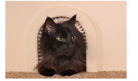 porta per gatti 50 gadget per il tuo gatto wired