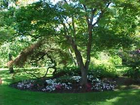Best Shade Tree For Backyard backyard trees for privacy large and beautiful photos