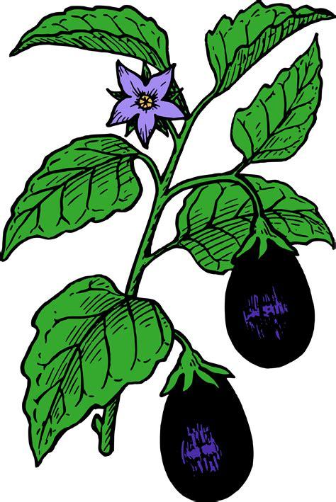 brinjal color clipart eggplant colour