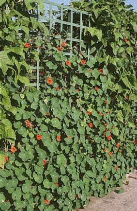 Plante Grimpante Qui Pousse Vite by Les Bonnes Raisons D Adopter Les Plantes Grimpantes Qui