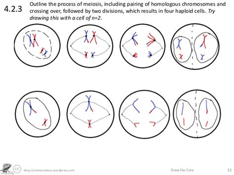 How To Draw Interphase