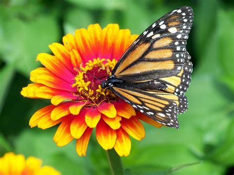 What Color Goes With Yellow And Red by Pollination Cool Kid Facts