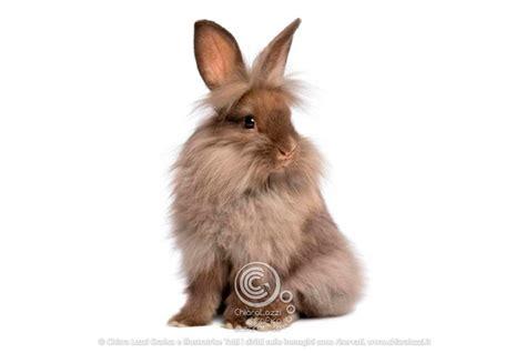 coniglio testa di il coniglio testa di conoscere e allevare questo