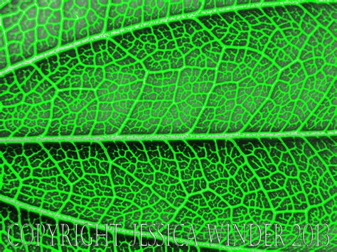 abstract pattern nature leaf pattern photographic salmagundi
