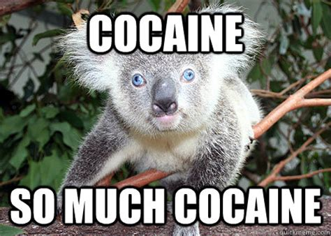 So Much Cocaine Meme - cocaine so much cocaine cocaine koala quickmeme