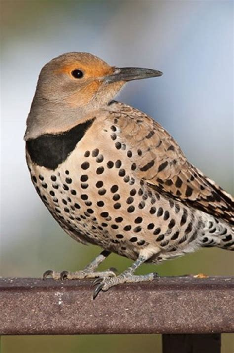 Backyard Bird Photography by Learn How To Do Bird Photography In Your Own Backyard