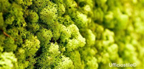 parete verde interni pareti verde verticale lichene ufficiostile