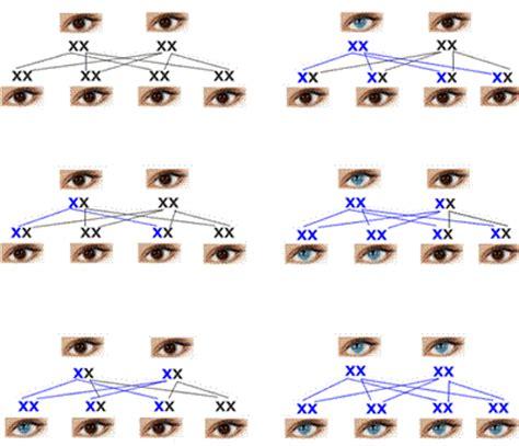 colore degli occhi diversi colore degli occhi approfondimenti