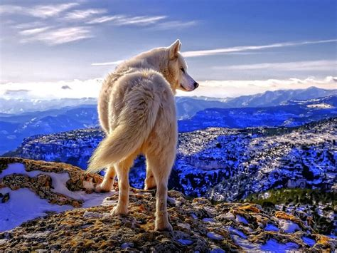 Wolf Trims Suites 86 best office puppies images on doggies
