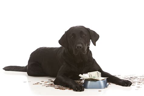 do puppies really need puppy food the most expensive food brands are they worth the price