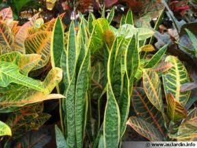 plantes d int 233 rieur