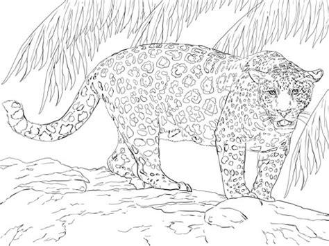 coloriage magnifique jaguar coloriages  imprimer gratuits