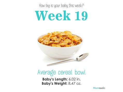 fruit 19 weeks how big is your baby week by week pregnancy guide