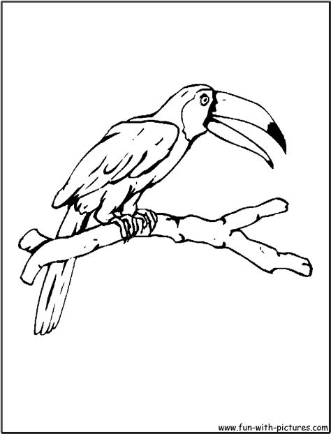coloring page of a toucan bird free coloring pages of drawings by toucan