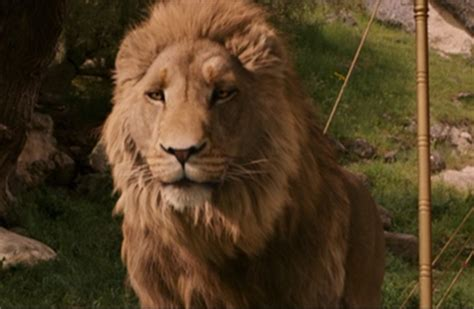 Aslan The Witch And The Wardrobe by Who Voiced Aslan In Quot The The Witch And The Wardrobe