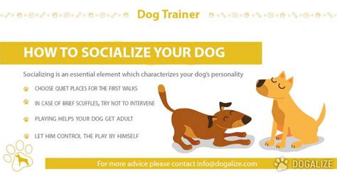 how to socialize an aggressive how to socialize your dogalize