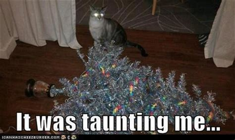 cat destroys christmas tree dump a day