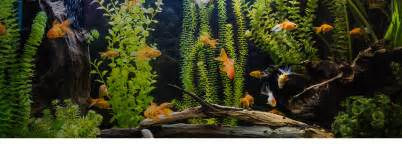 poisson animalerie et produits d aquariophilie jardiland