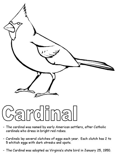 cardinal coloring pages preschool cardinal coloring page