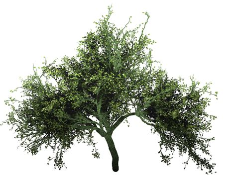 site tree generator cantree free tree generator by piiichan d