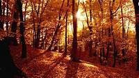 Autumn Forest Wallpaper For Desktop  PixelsTalkNet