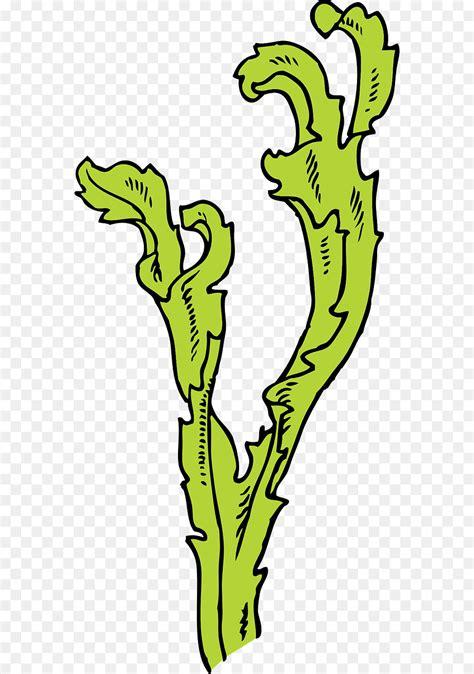 seaweed color seaweed kelp algae clip sea green color png