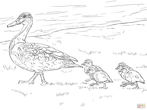 coloring page mallard duck duck and ducklings walking coloring page free printable
