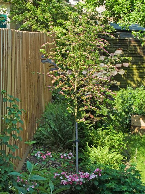 types of garden fences hgtv