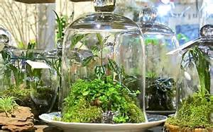 container gardening growing plants in difficult - Gardens In Glass Containers
