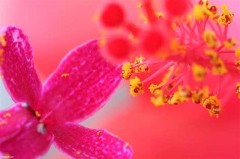 flower wallpaper online wallpapers hd desktop wallpapers free online flower