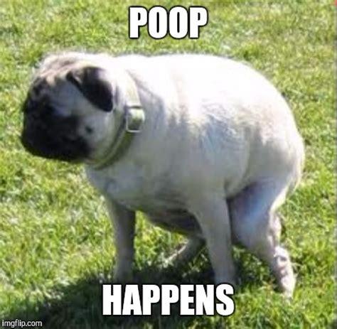 pooping pug happens imgflip