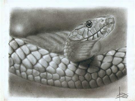imagenes de serpientes para dibujar a lapiz una serpiente salio de mi l 225 piz t taringa