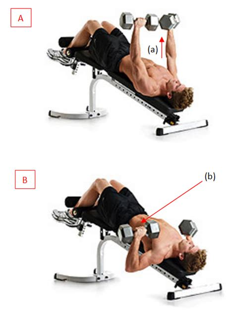 dumbbell decline bench press gain your muscle 4 cara membentuk otot dada di tempat