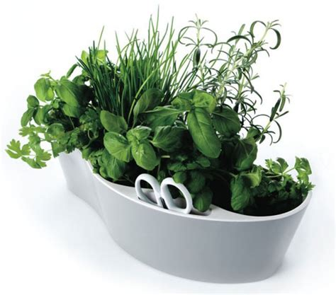 container herb gardening wannabeahippy small spaces container herb gardens