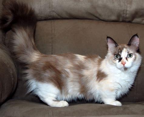 The Munchkin Cat!   Bioventures