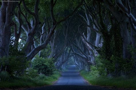 glitter wallpaper northern ireland the amazing dark hedges photography nice n funny