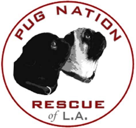 pug nation rescue pug slope