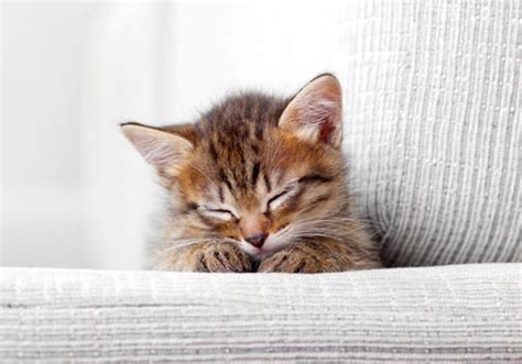 How To Keep Cats Sofa by How To Keep Your Cat From Scratching Your