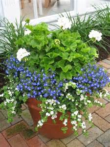 Design For Potted Plants For Shade Ideas White Geraniums Blue Lobelia And White Bacopa The Trailing Flowers All Do Fairly Well In