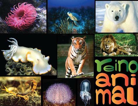Imagenes Reino Animal | mi peque 241 a biblioteca virtual reinos de la naturaleza