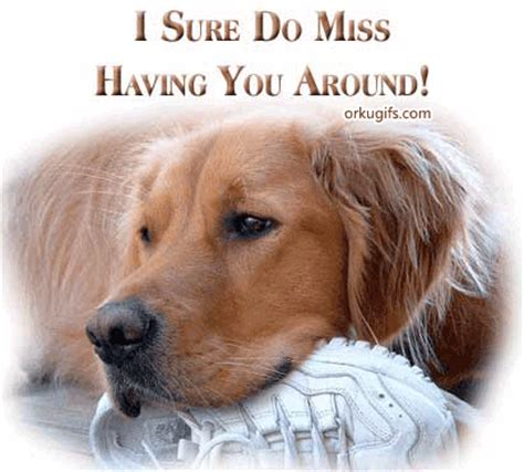 i miss you puppy i miss you picture saying inspiring quotes and words in