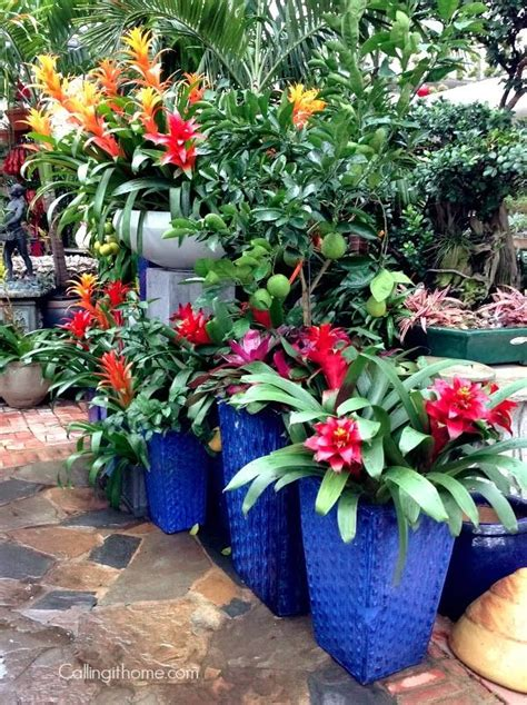 tropical container garden tropical containers container gardening