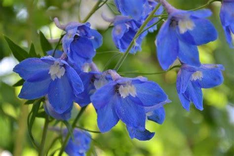 piante perenni fiorite piante fiorite perenni piante perenni come scegliere