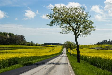 file country road and yellow field jpg wikimedia commons