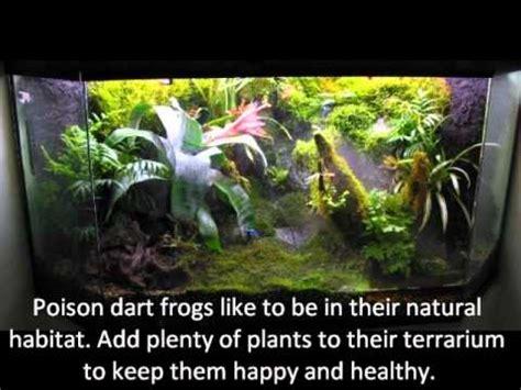 poison dart frogs part   enclosure