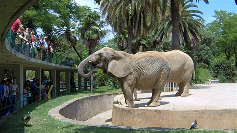 barcelona zoo barcelona zoo www pixshark com images galleries with a