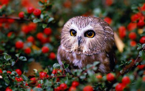 flora and fauna images natural slpendor hd fond d 233 cran and background photos 25517175